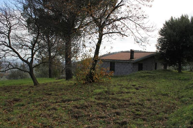 Buy to renovate house set in its own olive grove Italy