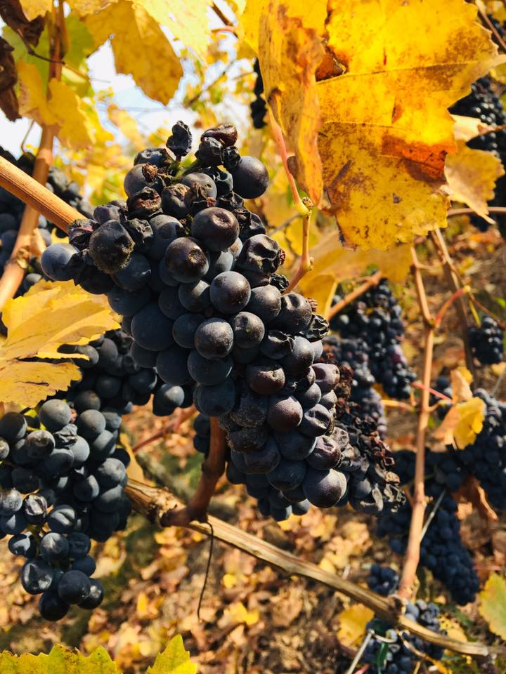 Fall grapes france #TuscanyDreams #Tuscany #italywishlist  #italy #beautyfromitaly Holiday home in France, Property for sale in France, Property under 50000 in France, Gites in France, brexit